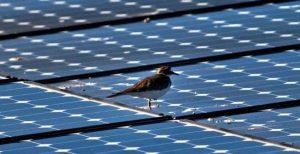 Ринок сонячних панелей в Європі виросте на 35% в 2018 році